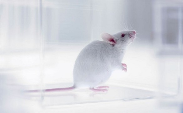 test mouse