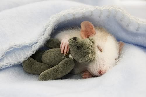 mouse-sleeping