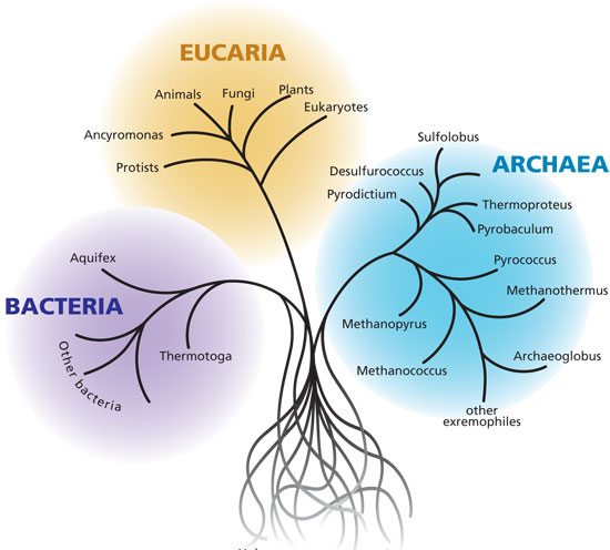 The three domains of life; the three broad categories of known living organisms.