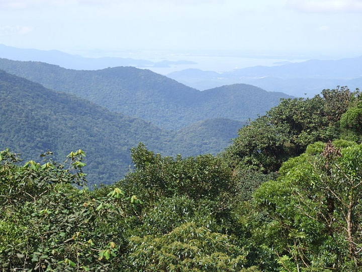 "The Brazil Atlantic Forest, from which the researchers studied trees and animals of over 2,000, and 800 species respectively. Photo credits: Deyvid Setti and Eloy Olindo Setti; ""Baía de Antonina vista da Serra do Mar2"". Via Commons."