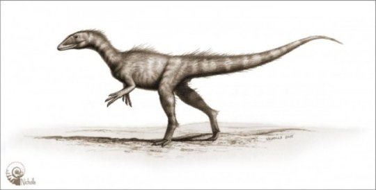 An artist's impression of the newly-discovered dinosaur species named Dracoraptor hanigani. Photo credits: Bob Nicholls.