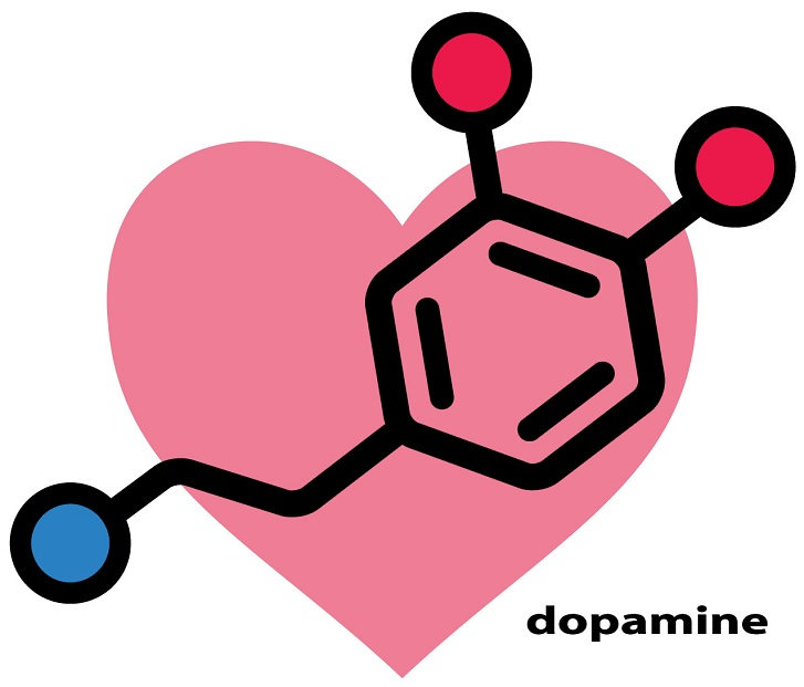 Dopamine function extends from the brain to other organs. In the brain, it is involved in the control of movement, and in reward and pleasurable feelings like sex and eating. If its transport in brain cells is impaired, neurological diseases might arise. Also, drug abuse will also affect its transport, and ultimately the brain.