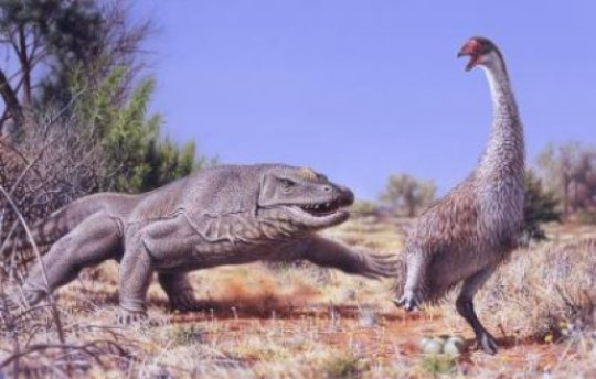 Illustrated above is the giant flightless bird called Genyornis newtoni. It is etimated to have around 50,000 years ago. Photo credits: Peter Trusler/ Monash University.