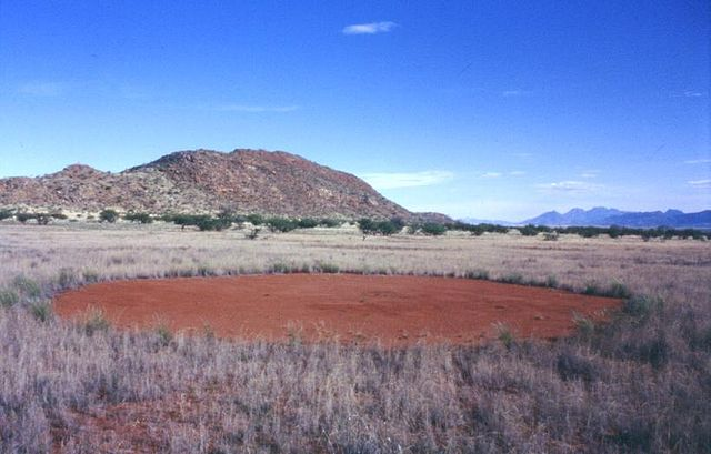 A single fairy circle in Namibia. The size thereof varies from 2 to 15 metres in diameter. Photo credits: Thorsten Becker.