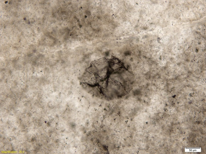 Fossil of 2.5 billion-year-old bacteria. Photo credits: Andrew Czaja.