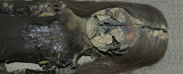 Saving 7,000-year-old mummies from dying of 'black goo'. Photo credits: Vivien Standen.