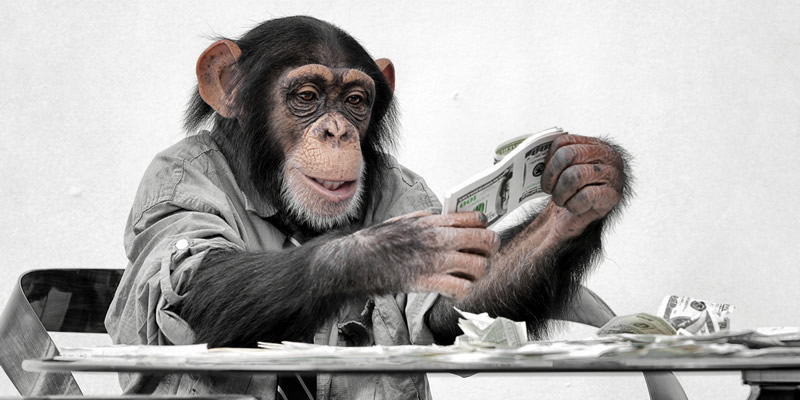monkey with money