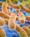 Your Gut Bacteria Choose Your Food & Your Offspring's Traits!