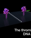 Nanorobots Kill Cancer in A New DNA Origami Study